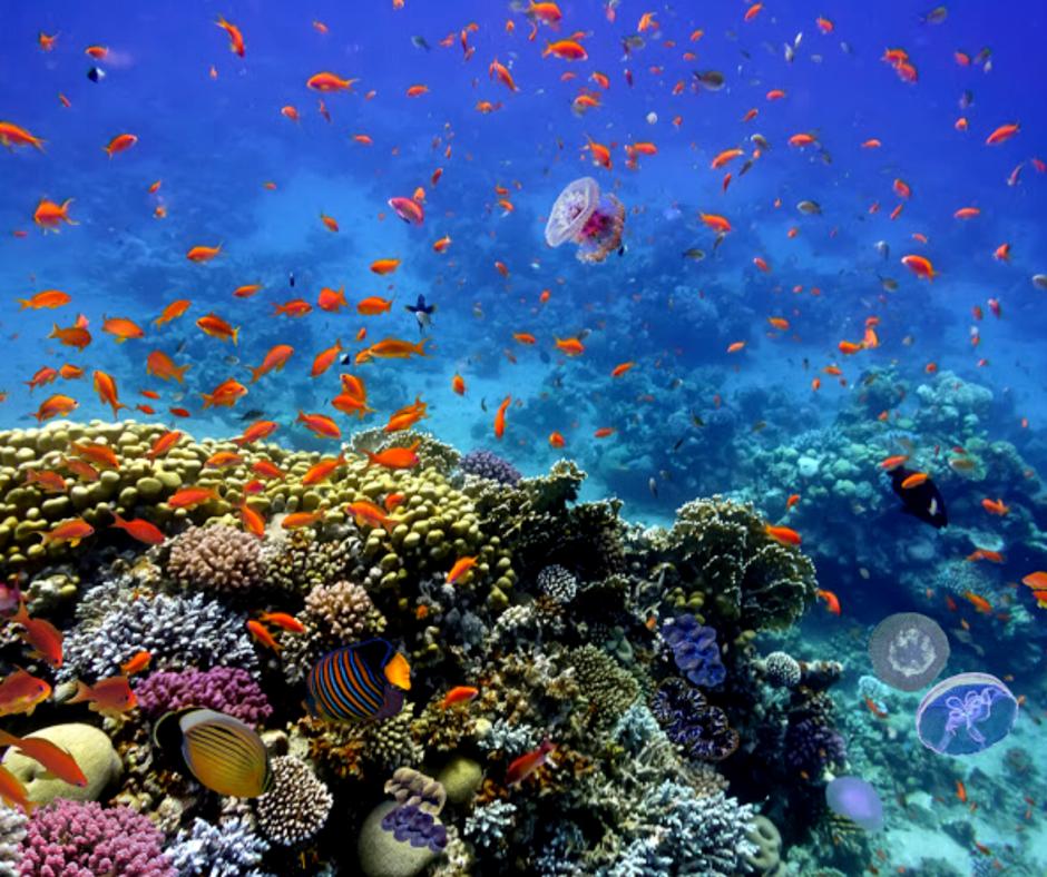 Сериала, открытка красное море